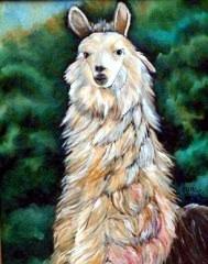Colon my pet llama