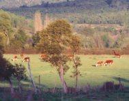 Rabones Las Vacas