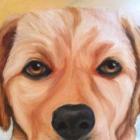 Gold Labrador Retriever Face