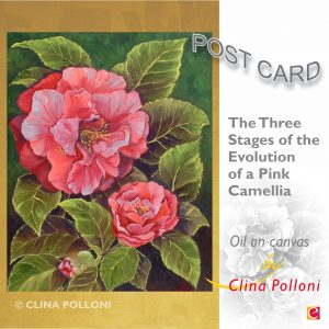 Pink Camellia of NC Postcard